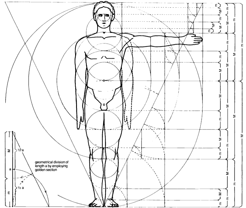Phi in the human body | Sacred Geometry